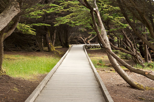 Wooden footpath through beach trees