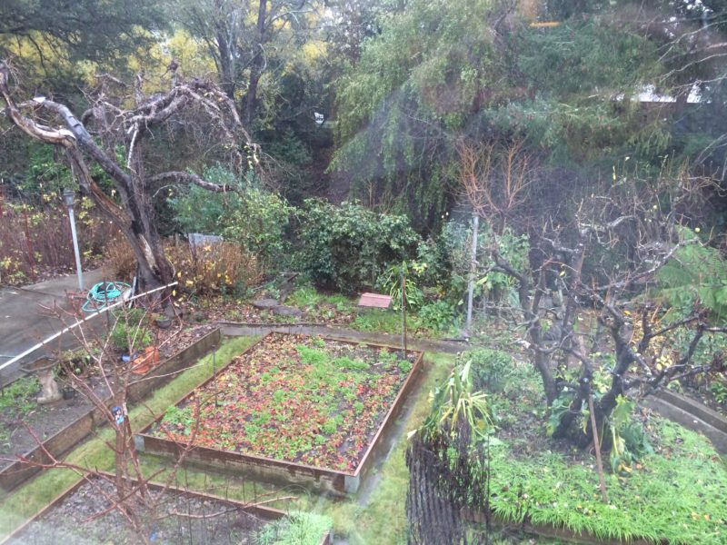 Birds-eye view of an overgrown backyard with large raised beds and lots of trees